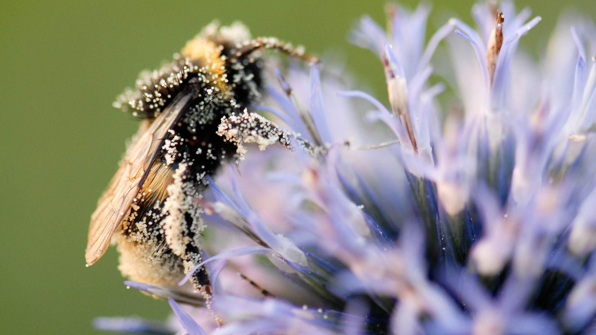 Les insectes pollinisateurs nous en mettent plein la vue