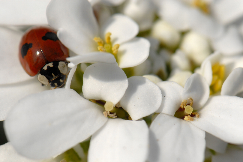 """Résultat de recherche d'images pour """"zero pesticide"""""""