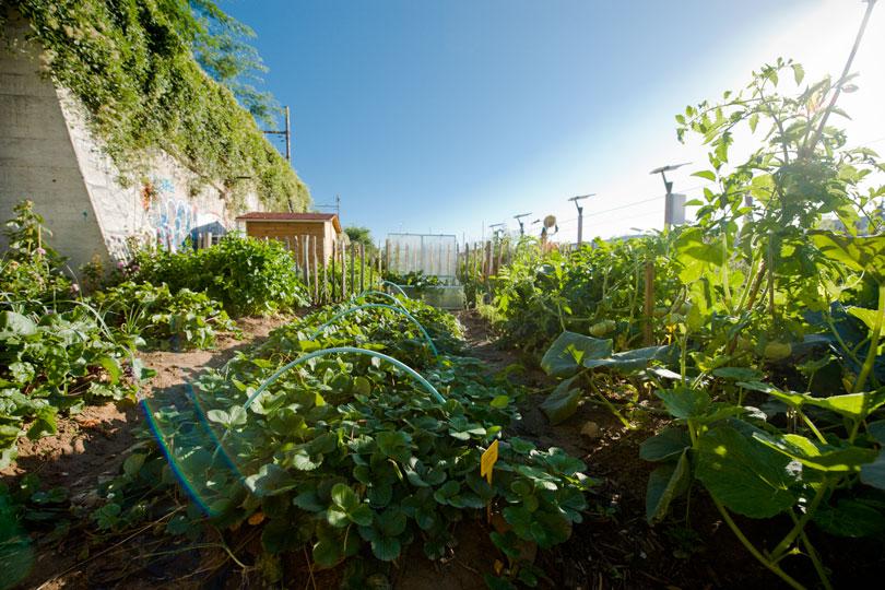 Jardiniers Les Pour Sont Pesticides Désormais Amateurs Chimiques qA7ngwxAZ