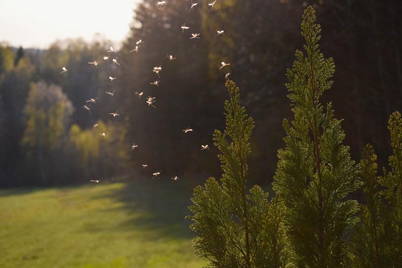 Qista Ou Comment Se Debarrasser Des Moustiques Ministere