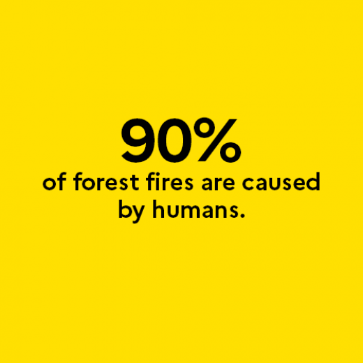 90% of forest fires are caused by humans.