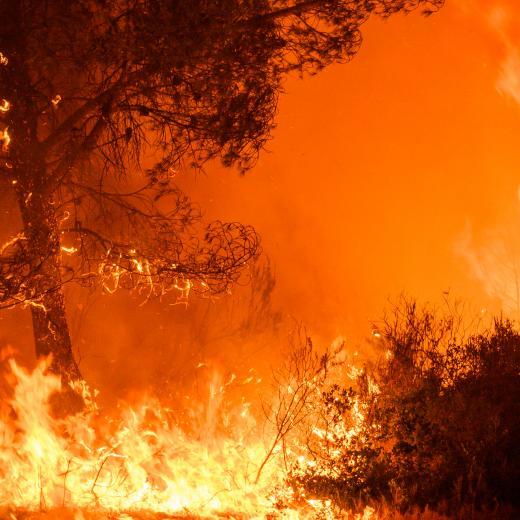 Une forêt en feu.