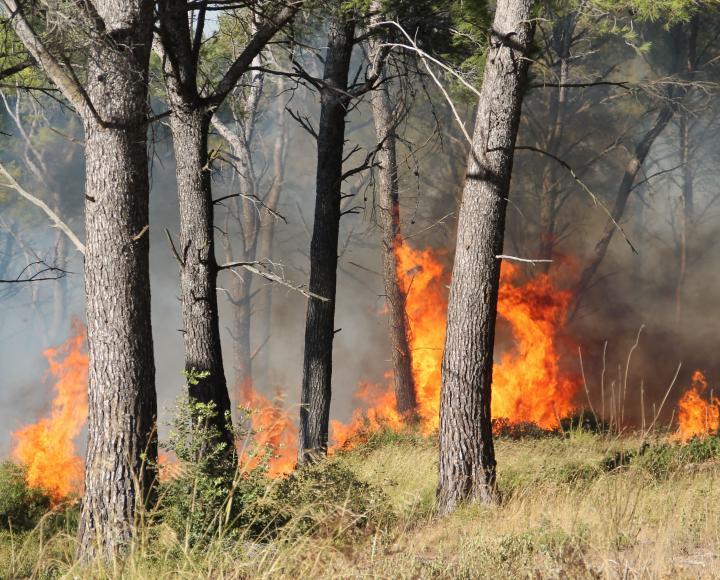 Image de feu